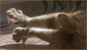 mon chat et mon canapé
